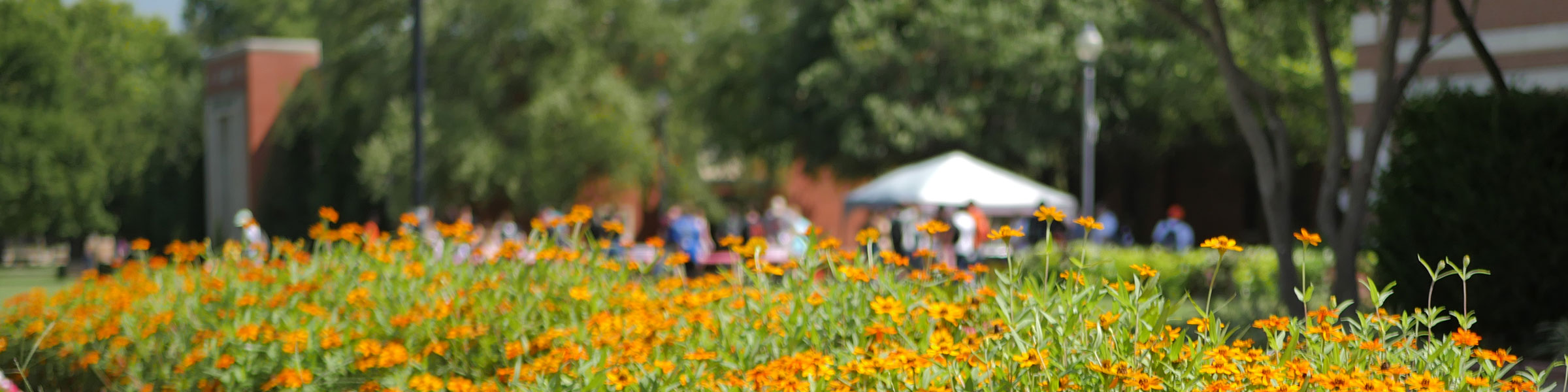 campus lawn with flowers in foreground