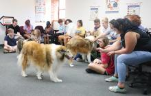 Therapy dogs visit ECU students.